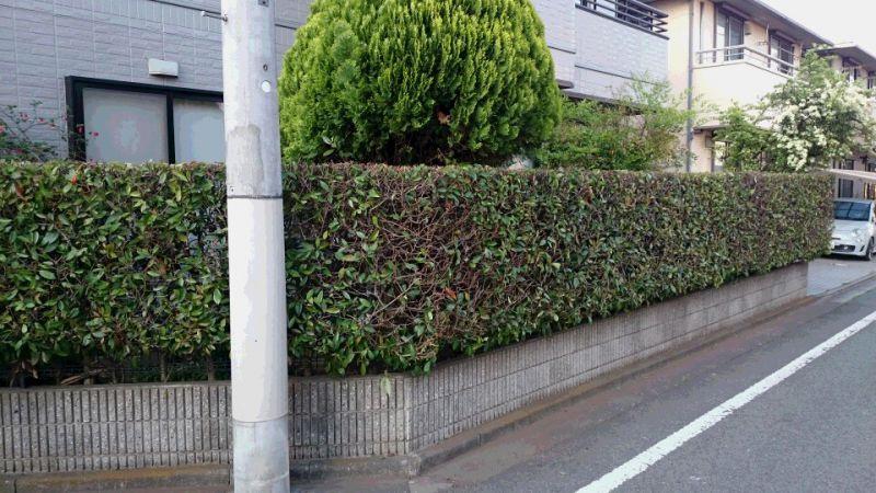 垣根の手入れ - クラシアン 埼玉ブログ