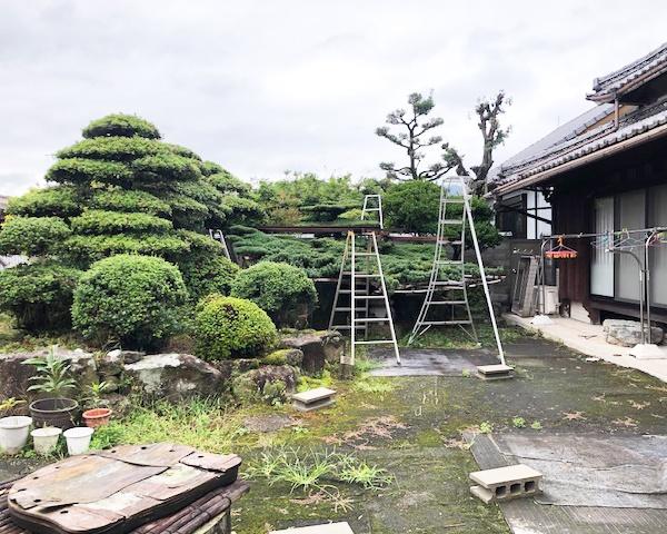 0921高松 松の木-1