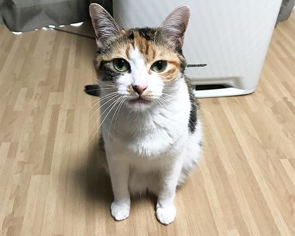 0730福岡 猫-1
