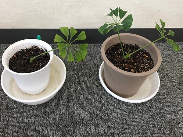 0423福島観葉植物2-1